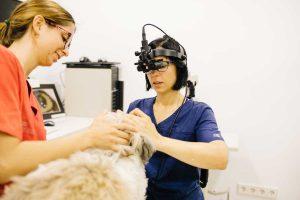 Cárol García de Hoz, veterinaria en oftalmovet oftalmología veterinaria